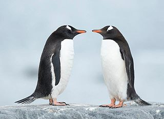 two penguins Hello Hello 8380162047