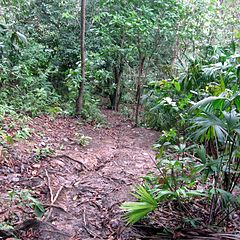 240px Jungle path in the Darién Gap