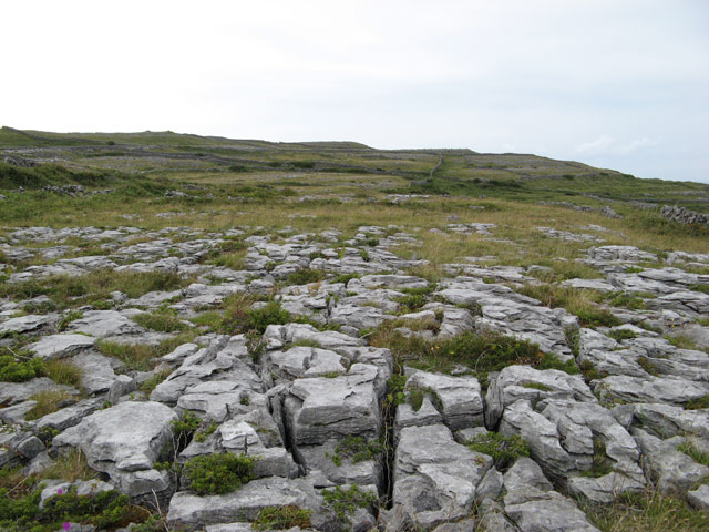 Limestone pavement - geograph.org.uk - 1471141