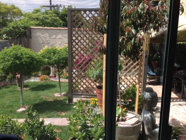 garden office view thru screen